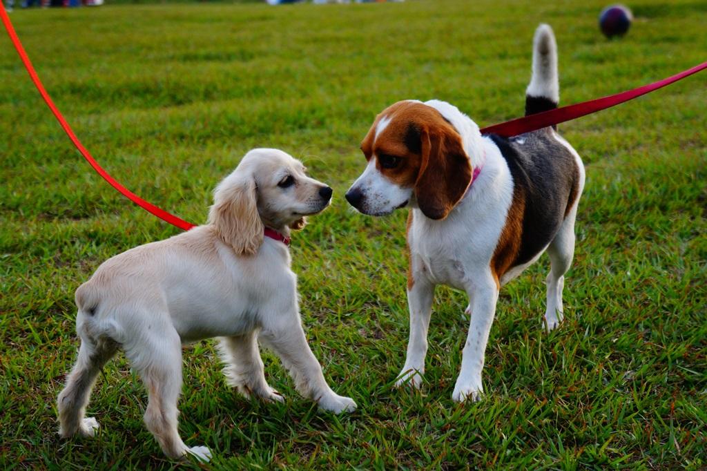Decalogo-de-como-quidar-mi-parque-blog-perros