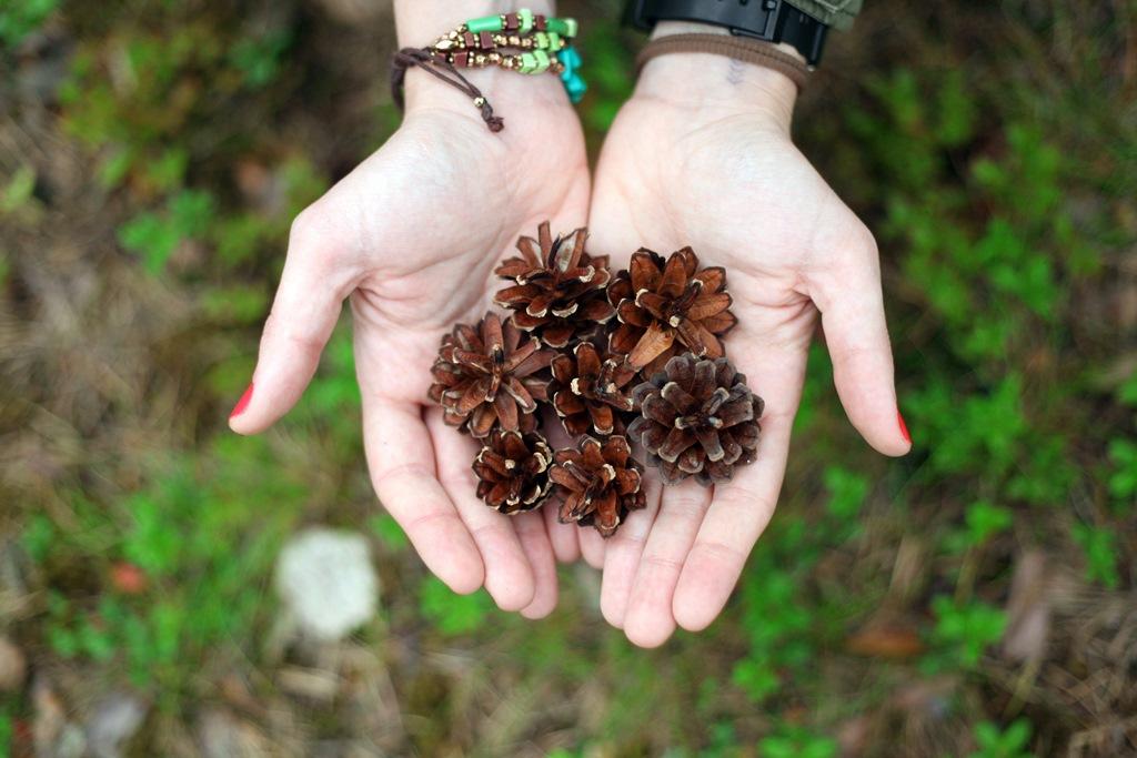 Manualidades-de-otoño-blog-recolectar