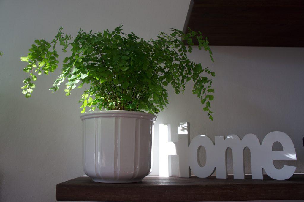 Soy-ecologico-en-pequeñas-acciones_plantas