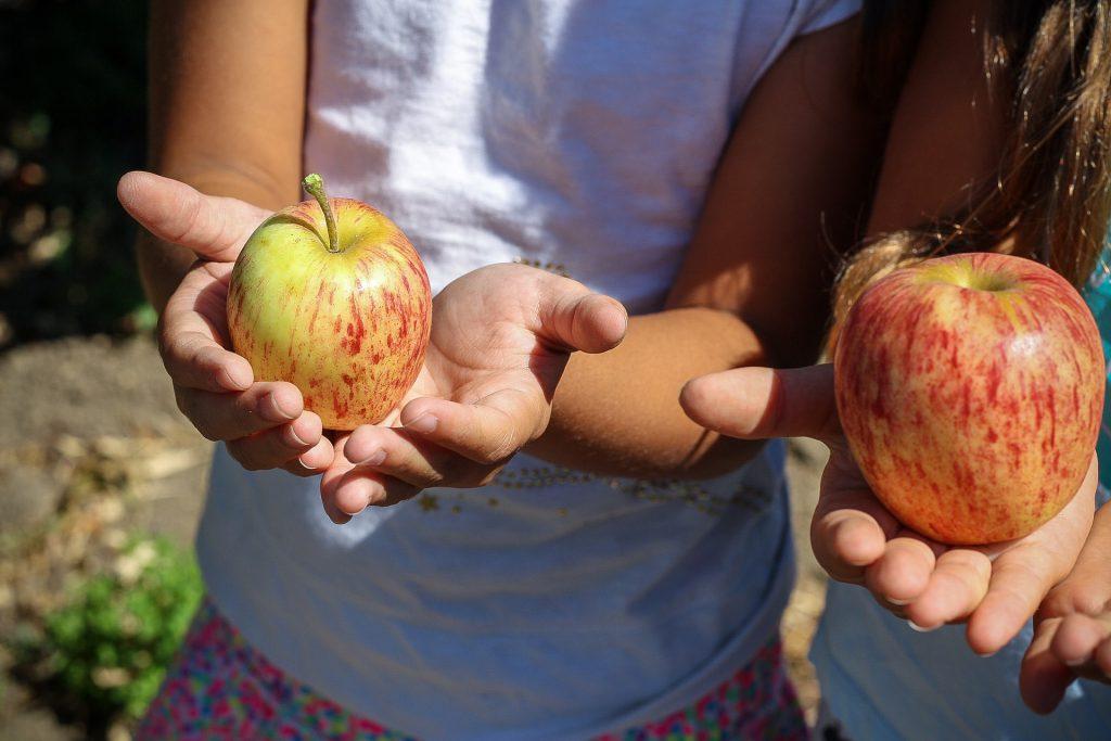 alimentacion-recreo-blog-fruta