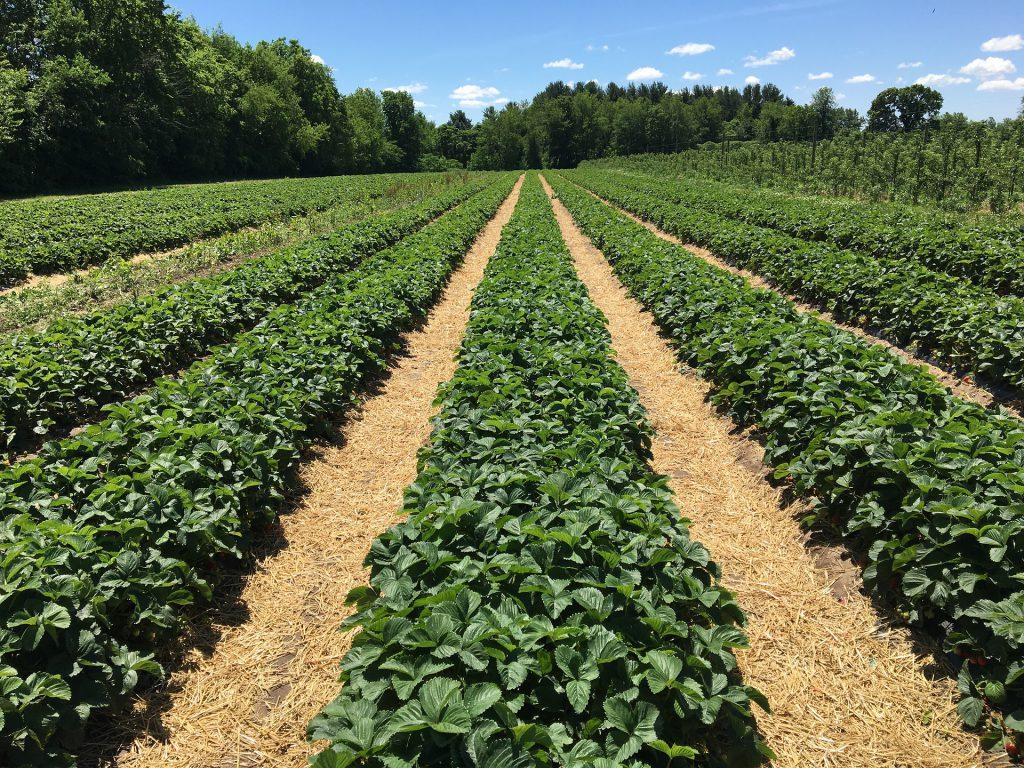 consejos-ecologicos-cuando-viajo-blog-agricultura