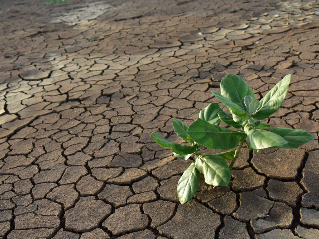 La-resiliencia-y-los-niños-blog-portada