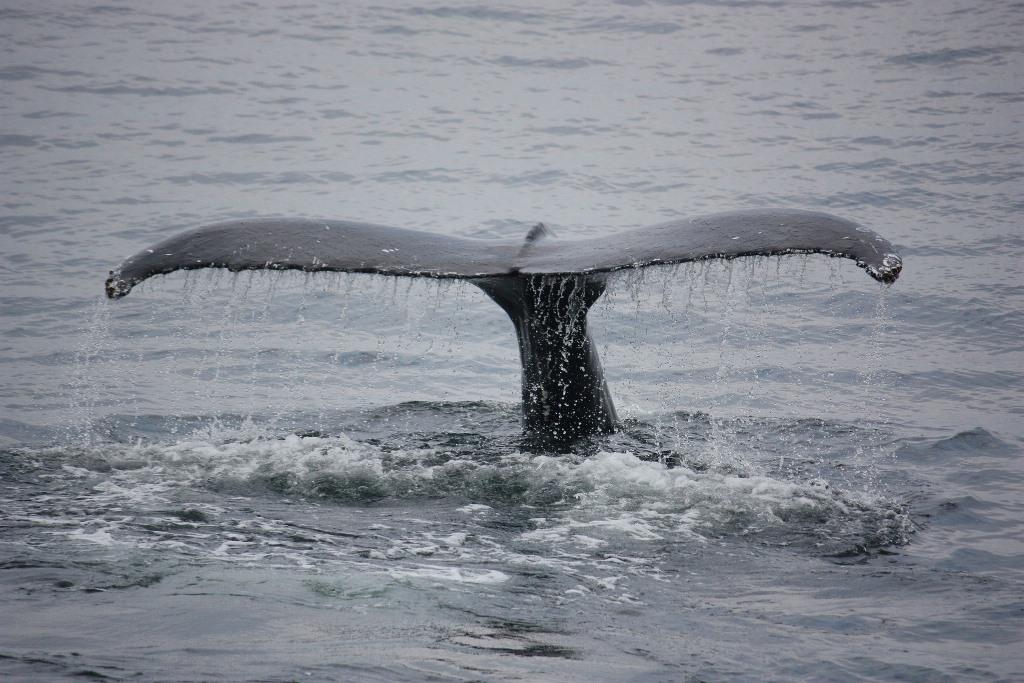 Me-ayudas-a-cuidar-los-oceanos-blog-ballena