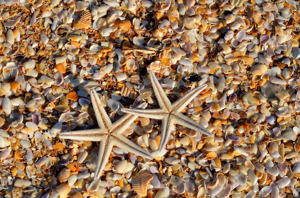 Me-ayudas-a-cuidar-los-oceanos-blog-conchas
