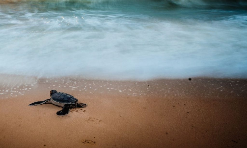 Crowfunding-la-gran-aventura-de-la-tortuga-Gali-blog-portada